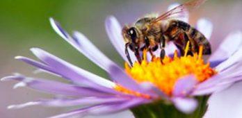 assemblée générale thème apiculture